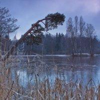 Первый лед... :: Михаил Ильяшевич