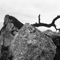 """""""Дракон"""" Гибралтарской скалы(ну, мне так показалось...) :: Анастасия Богатова"""