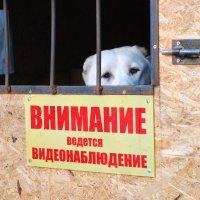 ...Вот я и наблюдаю!:)) :: Рудаков Сергей
