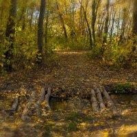 Теплым осенним днем :: Denis Aksenov