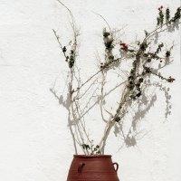 Букет теней на белой стене :: Alex Sash