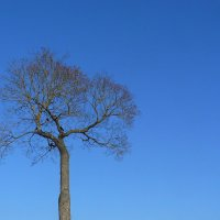 minimal tree :: Некто Небо
