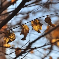Последние дыханее осени :: Мария Панькина