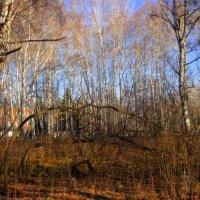 Вот стоят деревья ,  головы склонив. :: Мила Бовкун