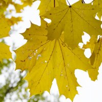 листья :: Даниил pri (DAROF@P) pri