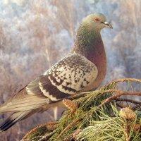 Птица Мира на Земле. :: Hаталья Беклова