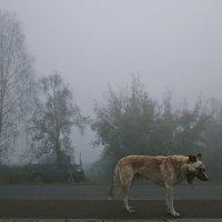Раннее утро :: Алексей Хвастунов