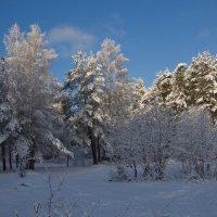 Зимние прогулки :: Мария Парамонова
