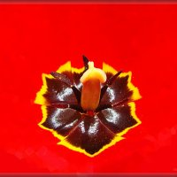 Сердце тюльпана :: Лидия (naum.lidiya)