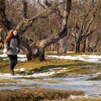 Яблоневый сад в Коломенском. :: Владимир Болдырев