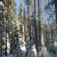 зима :: Виктор Елисеев