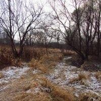 IMG_6100 - Дни до зимы не собьетесь считать :: Андрей Лукьянов