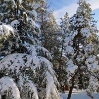 Зима в ноябре :: Наталья (D.Nat@lia) Джикидзе (Берёзина)