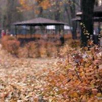 рыжая осень :: Ольга М