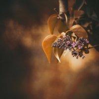 природа :: Амбарцумян Тигран
