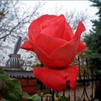 Осенняя красотка :: Татьяна Пальчикова
