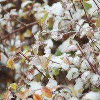 Осень-Зима :: Виктория Мацук