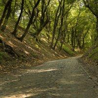 Стара дорога к рыцарскому замку :: Виталий Латышонок