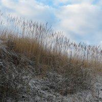 Ноябрьские травы. :: Лилия Гудкова