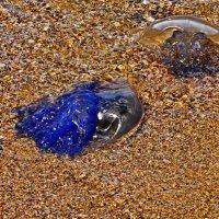 медузы :: Владимир Родин