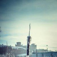 Зима камыш :: Дмитрий Колесников