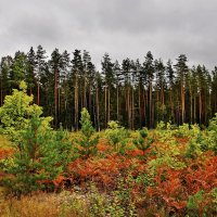 Осенний  пейзаж. :: Валера39 Василевский.