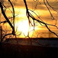Закат последнего дня ноября :: galina tihonova