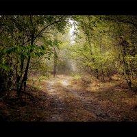 Осенний лес :: Василий Малыш
