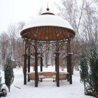 Зимний сад. :: Семён Пензев