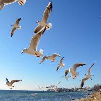 Против ветра :: Ольга Голубева