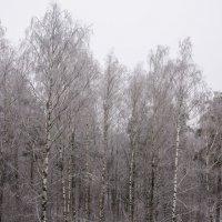 холодно :: Svetlana AS