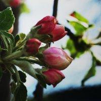 весна 2 :: Мария Мухина