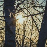 Холодные лучи :: Дмитрий Люльчак