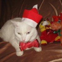 А я уже готов к встрече Нового года! :: Вера Андреева