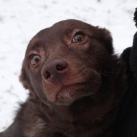 в приюте для собак :: Михаил Жуковский