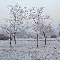начало зимы :: Елена