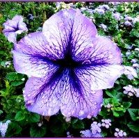 Blue Star :: Николай Дони