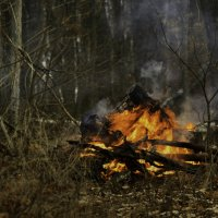 В лесу :: Татьяна
