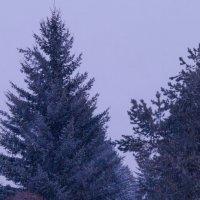 А снег идёт ! :: Алексей Масалов