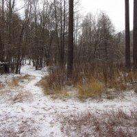 Img_6449 - Для первого дня зимы -  неплохо! :: Андрей Лукьянов
