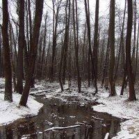 IMG_6531 - Для первого дня зимы -  неплохо! :: Андрей Лукьянов