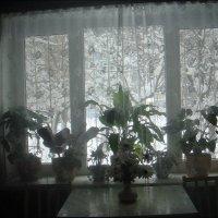 А за окном начинается зимушка-зима... :: Нина Корешкова