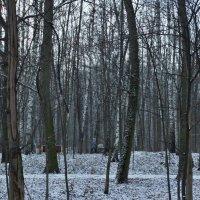 Студёный ноябрь :: Svetlana27
