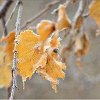 Здравствуй, зимушка-зима! :: galina tihonova