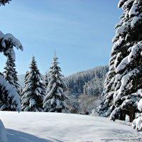 Зимний лес! :: Оксана Яремчук