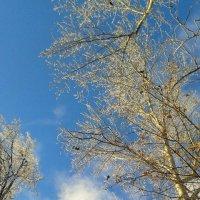 и неба синева... :: Наталья Дмитриева