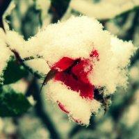 Аленький цветочек :: Katrin konareva