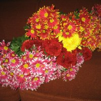 Хризантемы :: laana laadas