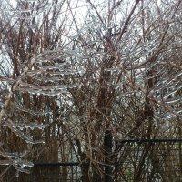 зима :: Ольга Богачёва