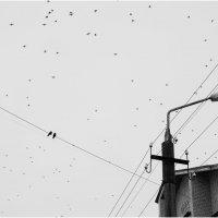 Птицы :: Иван Бельцин